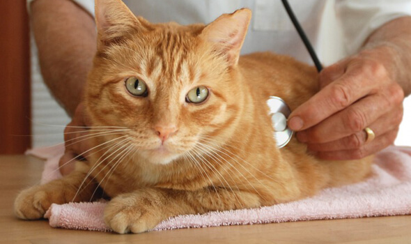 4 Reasons Why Cats Need Wellness Exams Too
