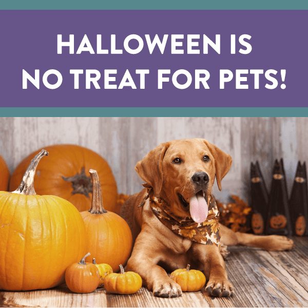 Halloween's No Treat For Pets!